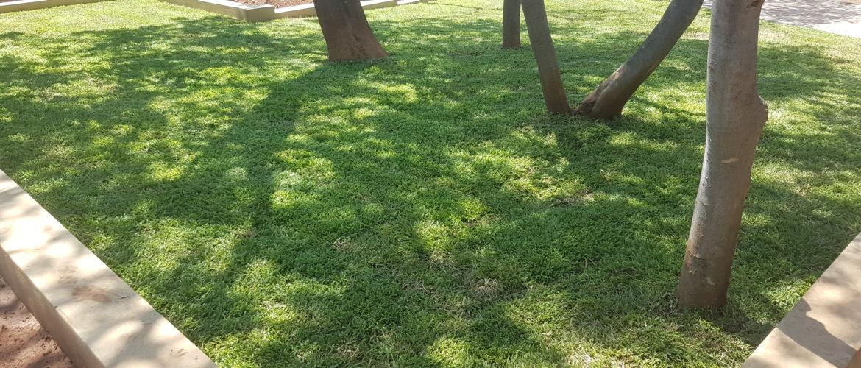 LM Shade Lawn